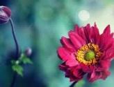 Vente de fleurs par l'APE