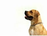 Entente Canine d'Etrembières
