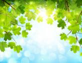 Journée de l'environnement 2017